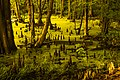 Chippokes Plantation - Cypress Swamp.jpg