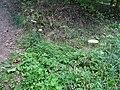 Chlumská stráň, houby.jpg