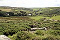 Coastal Heathland - geograph.org.uk - 497878.jpg