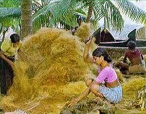 Coir - Segregation of coir fibre