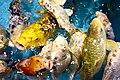 Colorful aquarium fishes, Radiant Fish World, Cox's Bazar (03).jpg