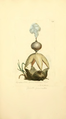 Coloured Figures of English Fungi or Mushrooms - t. 198.png