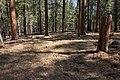 Continental Divide Trail - Flickr - aspidoscelis (42).jpg
