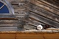 Contrast Cats in Vasilevo Wooden Buildings Museum.jpg