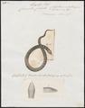 Coronella cobella - 1700-1880 - Print - Iconographia Zoologica - Special Collections University of Amsterdam - UBA01 IZ12100275.tif