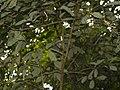 CostaRica (6109021330).jpg