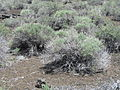 Craters of the Moon National Monument - Idaho (14377767660).jpg