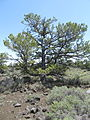 Craters of the Moon National Monument - Idaho (14378033777).jpg