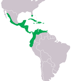 Terrestrial range of Crocodylus acutus (green).