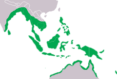 Crocodylus porosus Distribution.png