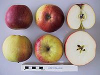 Cross section of Acme, National Fruit Collection (acc. 1956-013).jpg