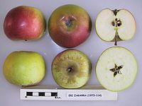 Cross section of Eri Zagarra, National Fruit Collection (acc. 1973-114).jpg