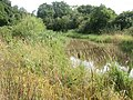 Crow, bulrushes - geograph.org.uk - 1426792.jpg