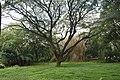 Cubbon Park DSC 5416.jpg