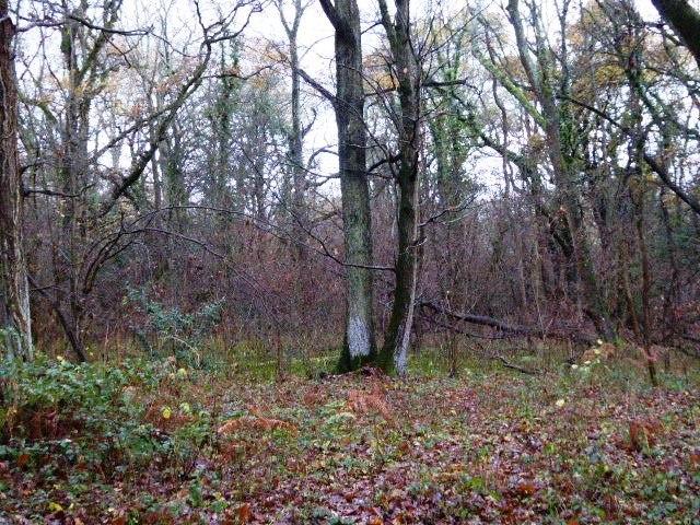Cucknell's Wood (1)