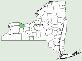 Cucumis anguria NY-dist-map.png