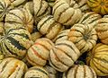 Cucurbita pepo acorn group Home Kitchen Garden Carnival Squash.jpg