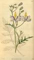 Curtis's Botanical Magazine, Plate 3044 (Volume 58, 1831).png