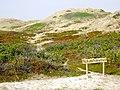 Dünen Sylt Naturschutzgebiet.jpg