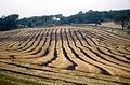 Dalmeny - Farm Scene in Fall.jpg