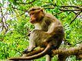Daulatabad, Aurangabad - panoramio (40).jpg