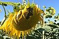 De la floraison à la fructification (2).jpg