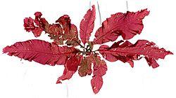 Delesseria sanguinea, alga czerwona, ma chloroplasty, które zawierają czerwone pigmenty, takie jak fikoeryteryna, które maskują ich niebiesko-zielony chlorofil a. [35]