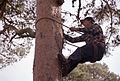 Demostración de subida a un pino para cortar las ramas secas 01.jpg