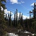 Denali National Park, Alaska (2).jpg