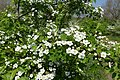 Detail flora P1140290.jpg