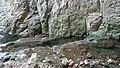Devetaki Cave-Деветашка пещера - panoramio (34).jpg