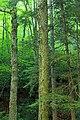 Devils Hole Creek (Revisited) (14) (28220040514).jpg