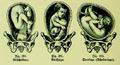 Die Frau als Hausärztin (1911) 190 192 Lagen des Kindes bei der Geburt.png
