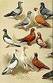 Die Vogel (1913) (14751718975).jpg