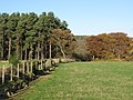 Dipton Wood - geograph.org.uk - 611167.jpg