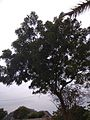 Divine Tree And The Looming Clouds.jpg