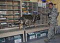 Dog, handler share unconditional bond 131010-F-WZ808-014.jpg