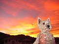 Dog at sunset test.jpg