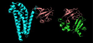 Protein domain - Insertions of similar PH domain modules (maroon) into two different proteins.