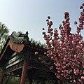 Dongcheng, Beijing, China - panoramio (102).jpg