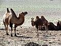 Dornogovi Province - Mongolia (6248518904).jpg