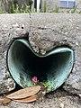 Drain pipe curb hole to street.jpg