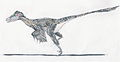 Dromaeosaurus EF.jpg