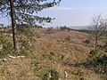Duddle Heath - geograph.org.uk - 396031.jpg