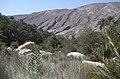 Dunst Oman scan0152 - Wadi.jpg