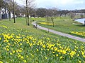 Early Spring by the Dee - geograph.org.uk - 740167.jpg