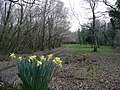 Early spring in Cornwall - geograph.org.uk - 715968.jpg