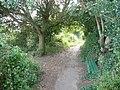 East Devon , Bench, Tree and Coast Path - geograph.org.uk - 1476780.jpg