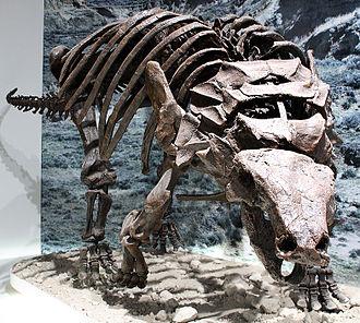 Edmontonia - Restored E. rugosidens skeleton without back armour