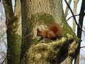Eichhörnchen23.Febr.08.jpg